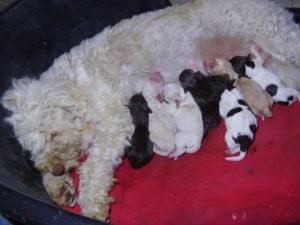 Cuccioli B appena nati