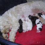 """Cuccioli """"B"""" appena nati"""