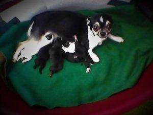 Tina e cuccioli