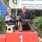 DAMO DELLA CAVEJA (6 months): BOS Puppy Rad. Bastia U. '19; BIS Puppy Rad. Bagno '19.