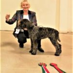 DARIO DELLA CAVEJA (UK): BP & Res.BIS LRCGB Club Open Show 10/'19 (6 months old)